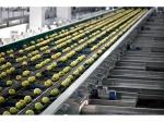 фото Оптоэлектронный калибровщик фруктов и овощей по весу POMONE 4